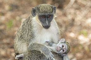female with baby, The Gambia