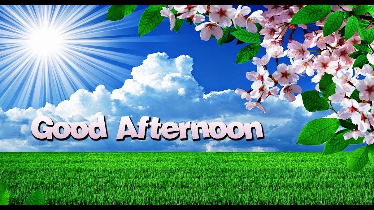Very Good Afternoon   Good Afternoon Video Clip For Whatsapp