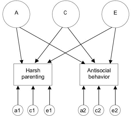 Schematic behavioral genetic common factors model. A=genetic, C=shared  environmental,