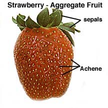 Aggregate Fruit Examples
