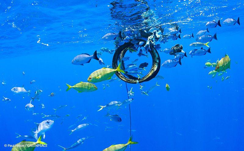 Fish Aggregating Device