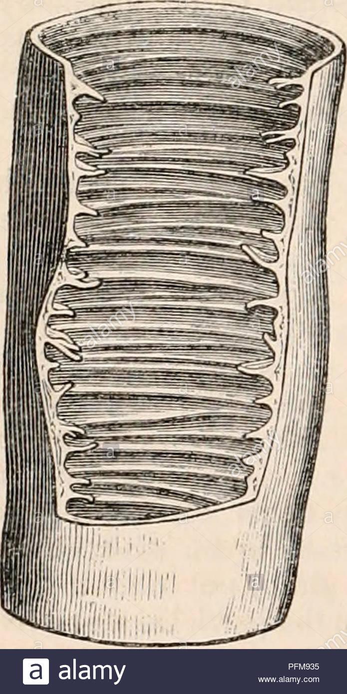 . La cyclopaedia de anatomía y fisiología. Anatomía; fisiología; Zoología.  346 El estómago y el intestino. Esta túnica en todas partes consta de las