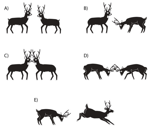 Male agonistic behaviours in male pampas deer(Ozotoceros bezoarticus): |  Download Scientific Diagram