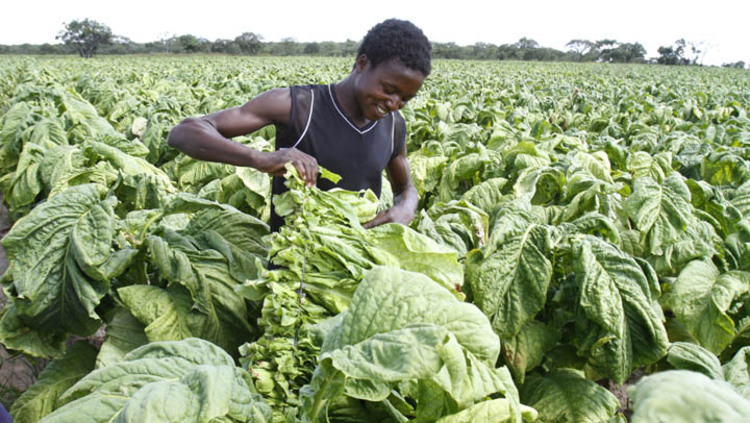 Getting right skills for agric