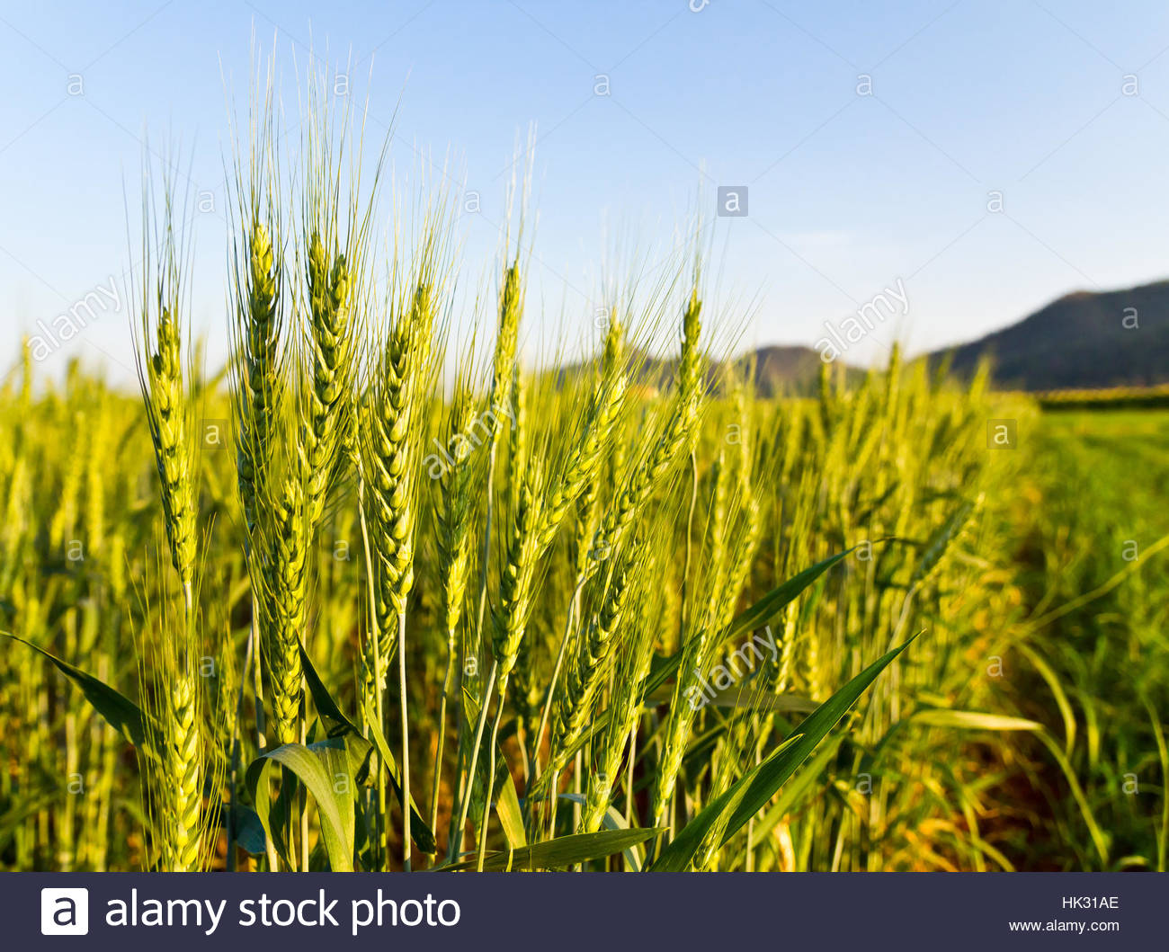 food, aliment, bread, agricultural, agriculturally, lifestyle, agriculture,