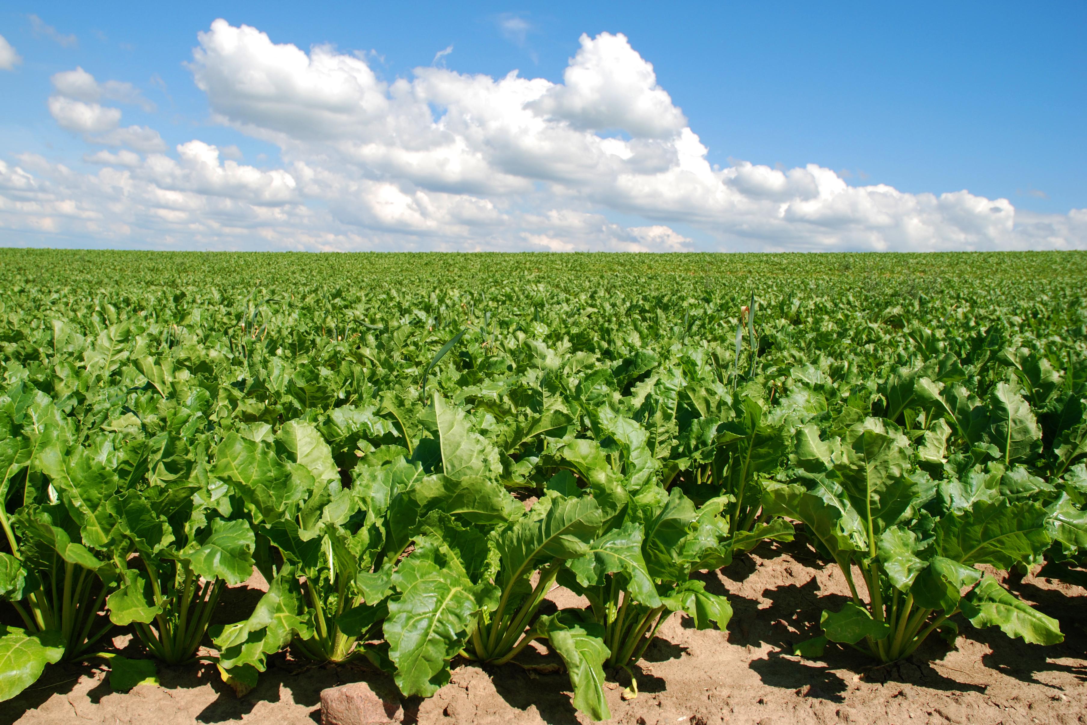 Diseñan un software para incrementar la sostenibilidad del sector  agroindustrial / Noticias / SINC