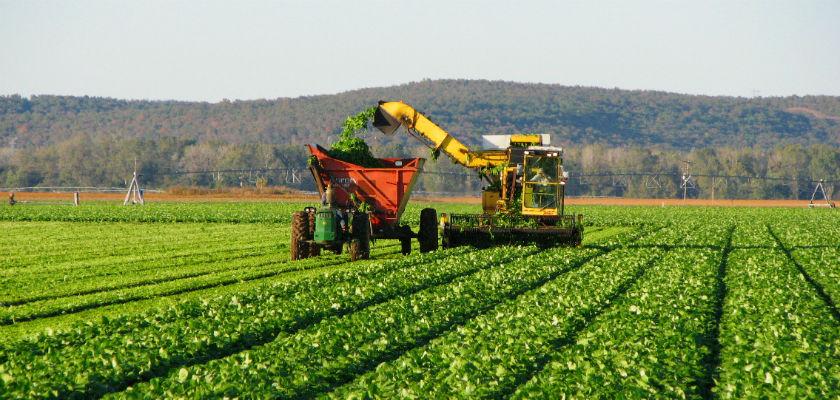 Seguridad y Salud en el Trabajo en el Sector Agroindustrial