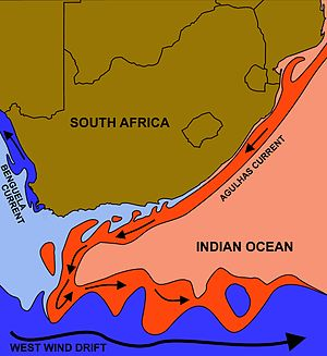 The courses of the warm Agulhas current (red) along the east coast of South  Africa, and the cold Benguela current (blue) along the west coast.