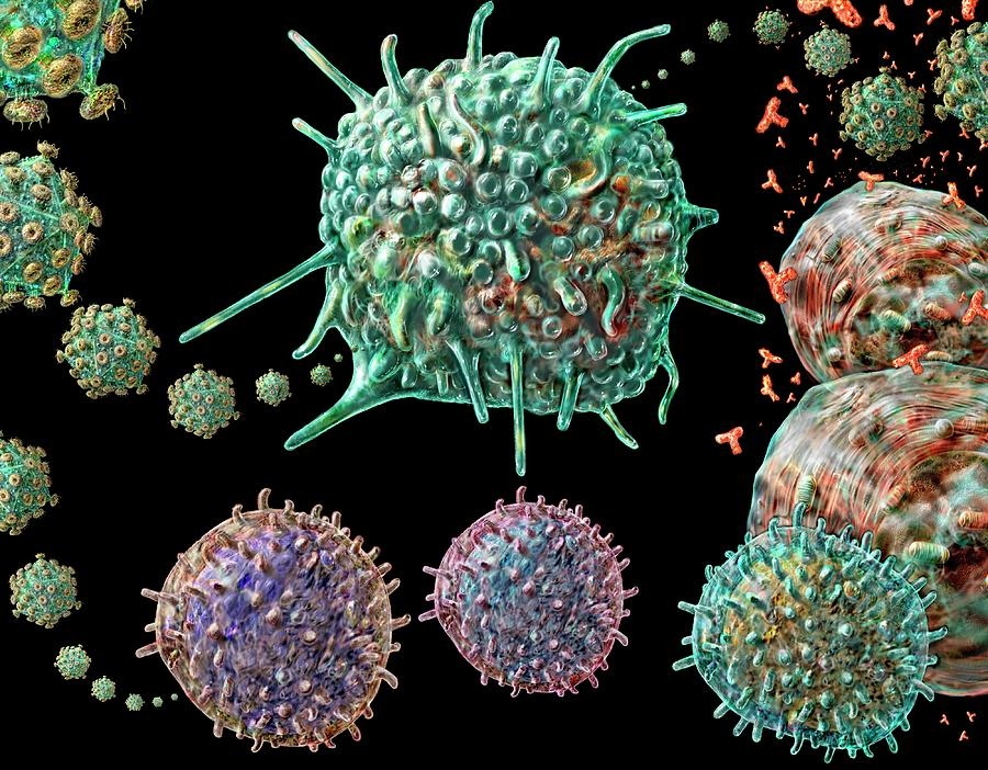 Round Shape Photograph - Aids Virus And Immune System Cells by Russell  Kightley/science Photo