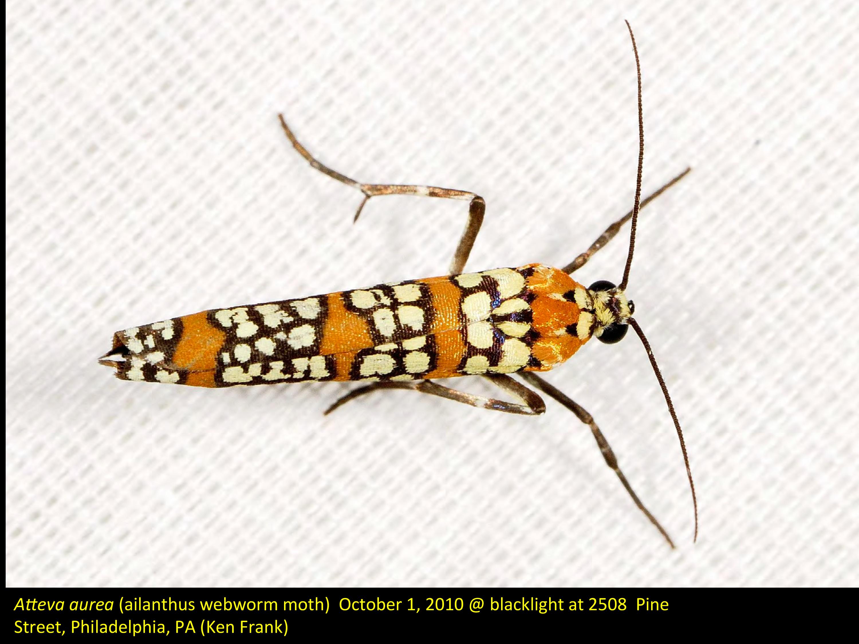 https://ecologyofwestpark.files.Traveller Location/2015/07/000-moths-at-light-in-center-city-4.jpg