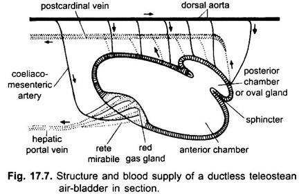 air bladder