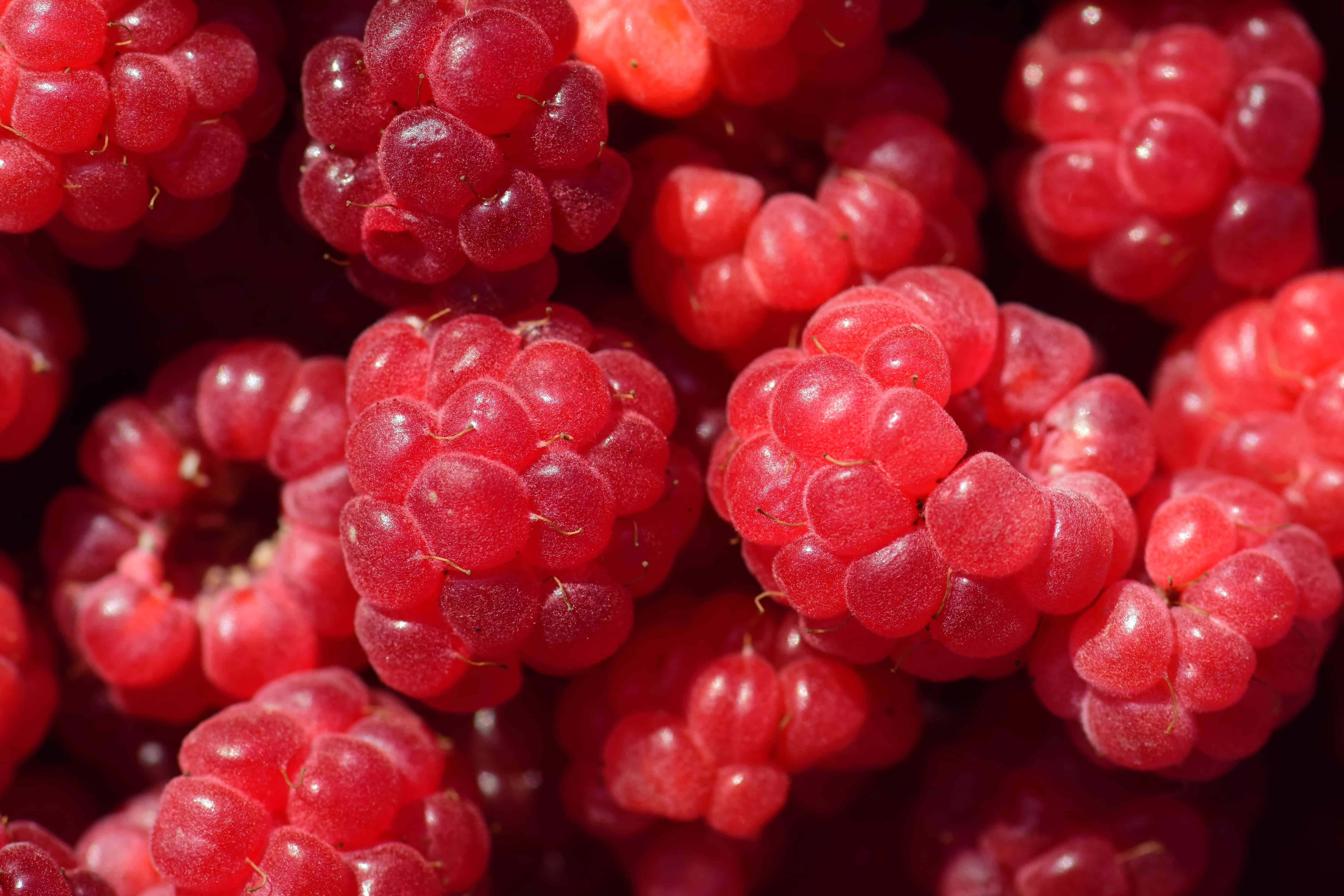 fruto, baya, delicioso, dieta, dulces, alimentos, nutrición, frambuesa