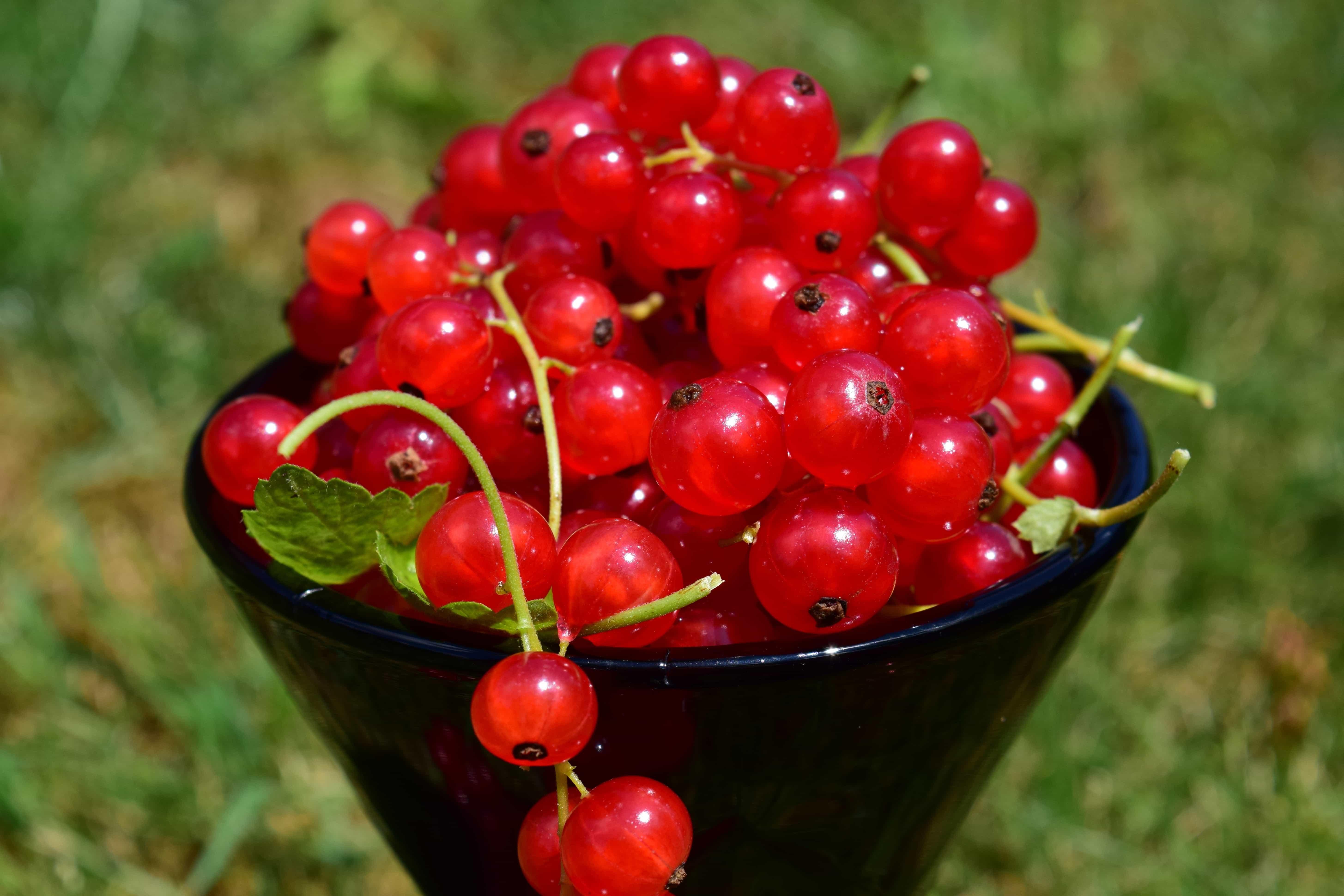 fruta, comida, hojas, jardín, baya, grosella, dulce