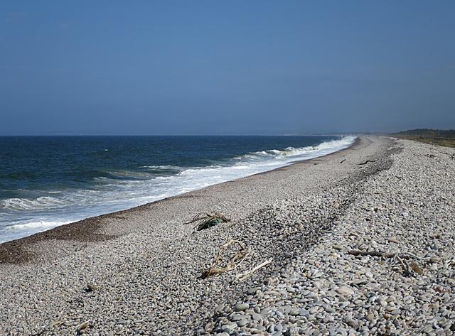 Beach Berm