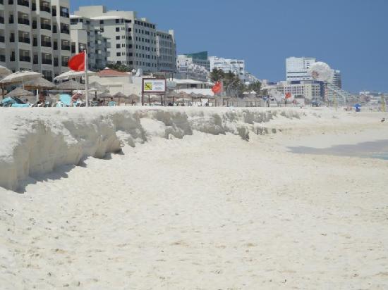 The Royal Sands: Beach scarp