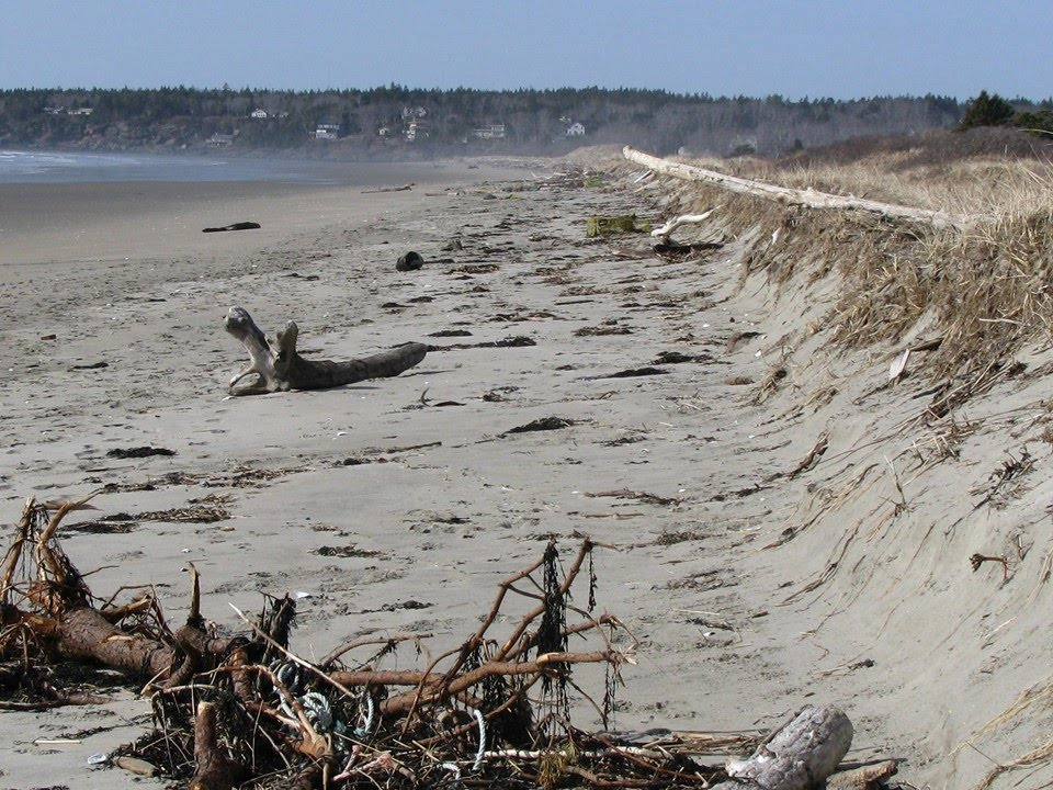 Erosional scarp along the western section of Seawall Beach. Note flat beach  profile and debris from high tide up against the scarp.