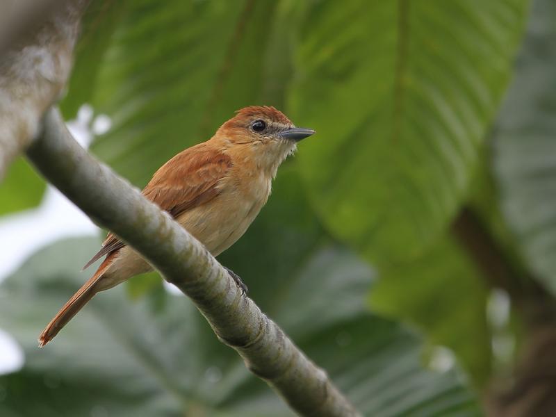 A perched bird