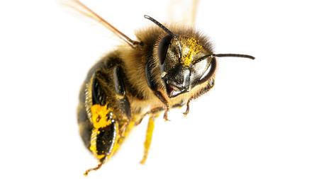 Bees understand the concept of zero