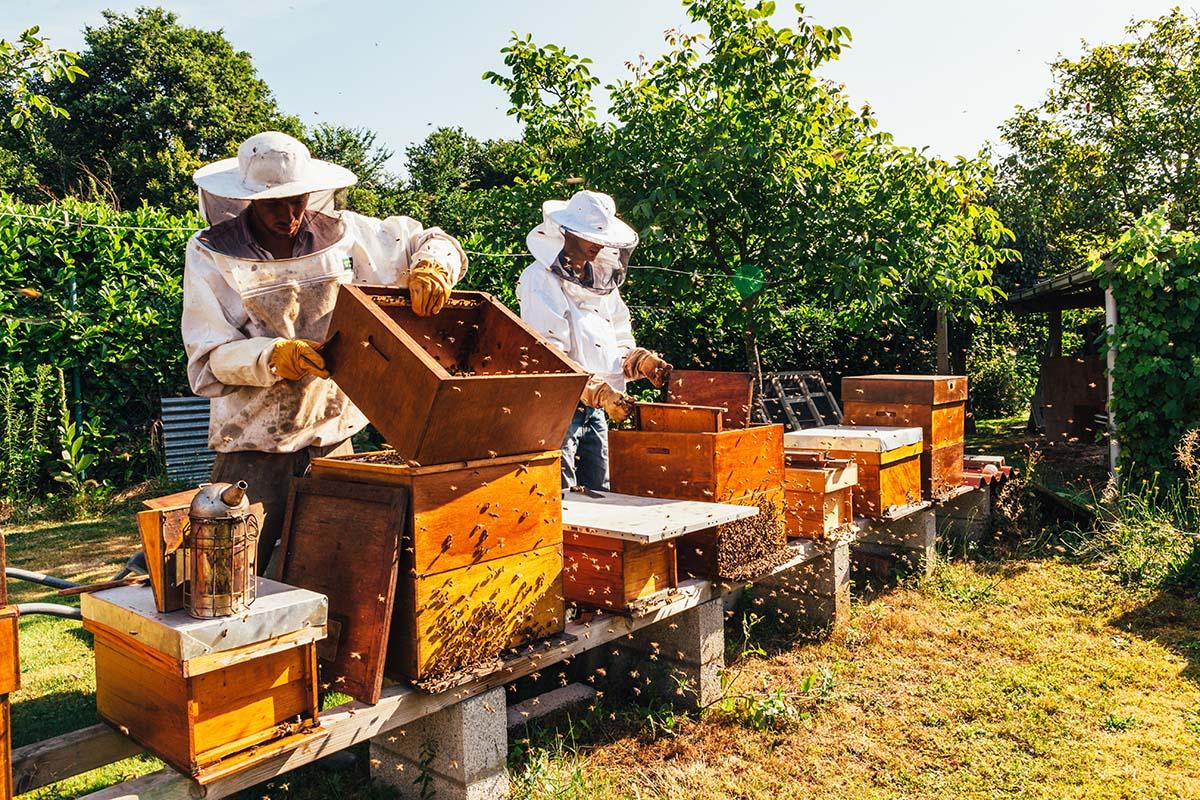 beekeeping tips for September