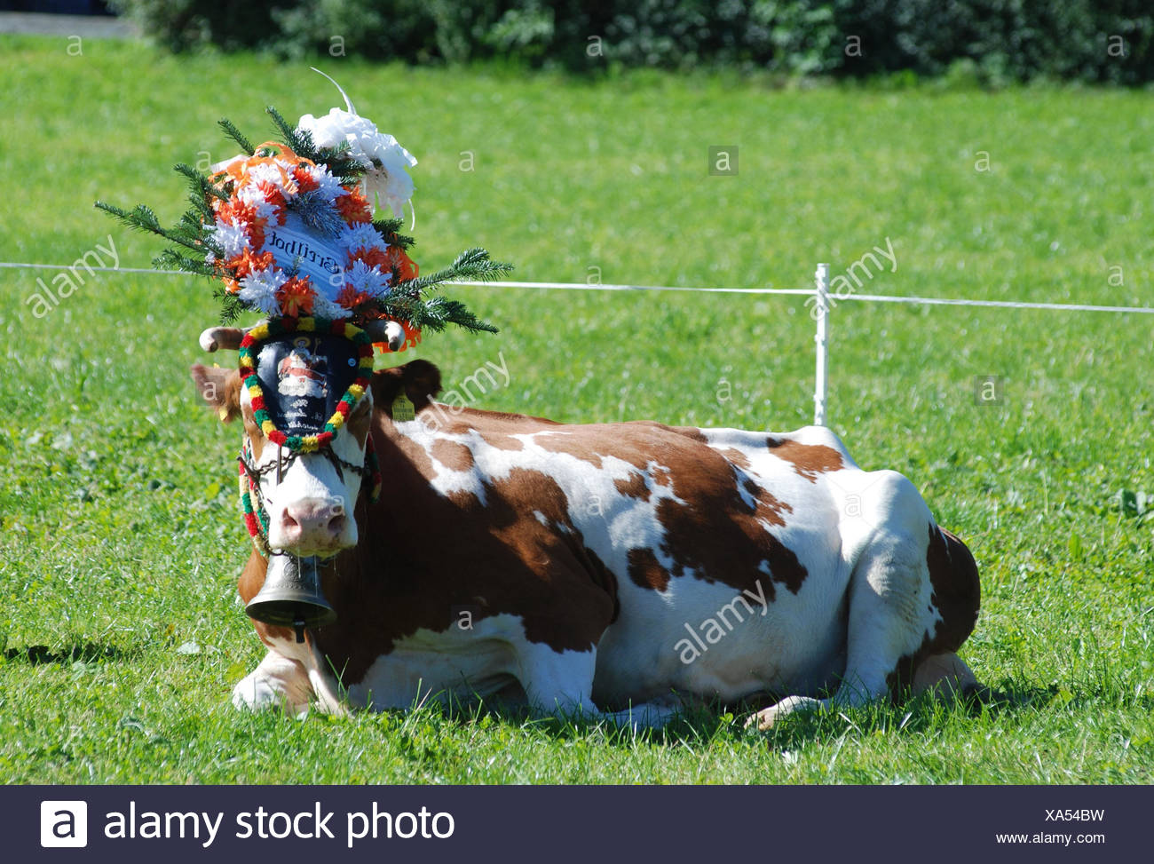 Almabtrieb, cow, headdress, meadow, lie, tradition, traditions, autumn,