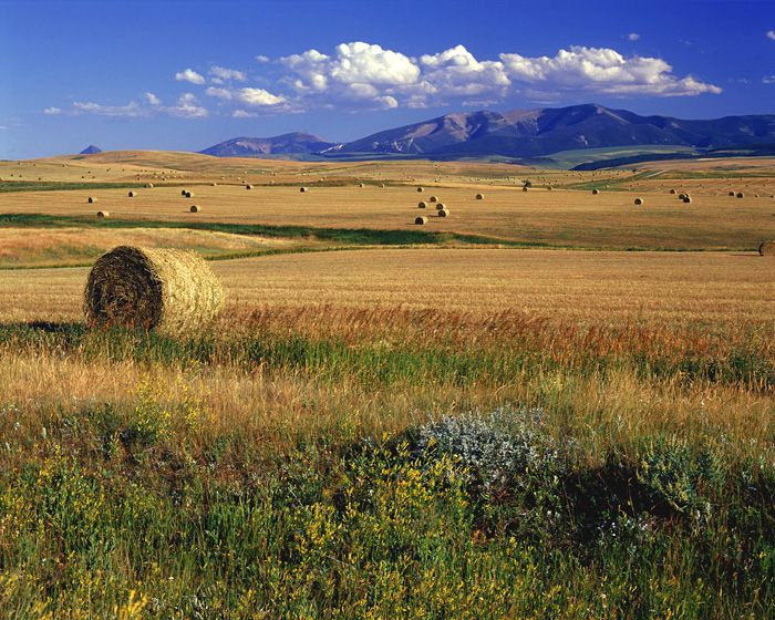 little belt mountains montana - Google Search