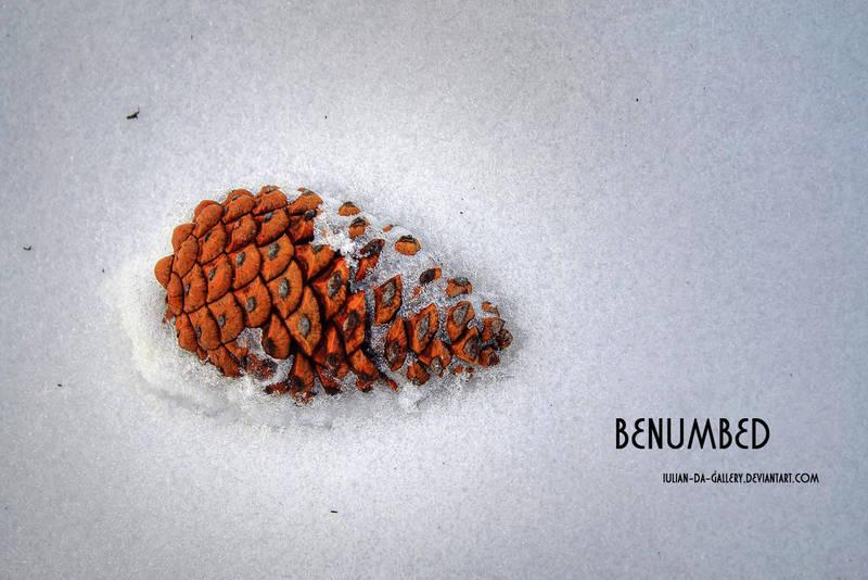 benumbed by Iulian-dA-gallery