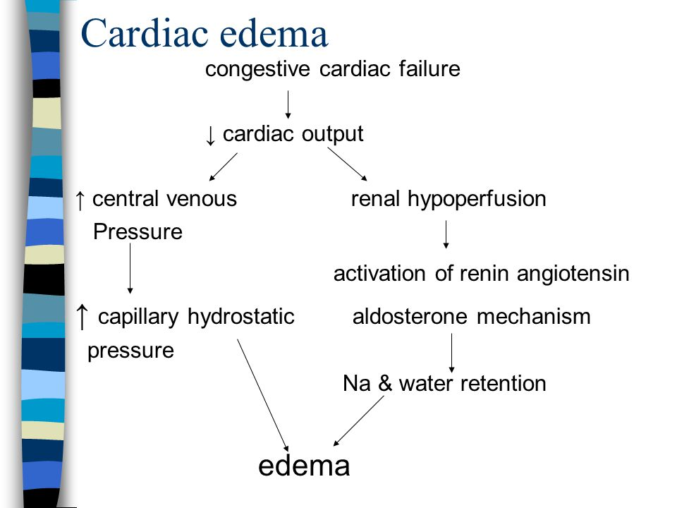 26 Cardiac