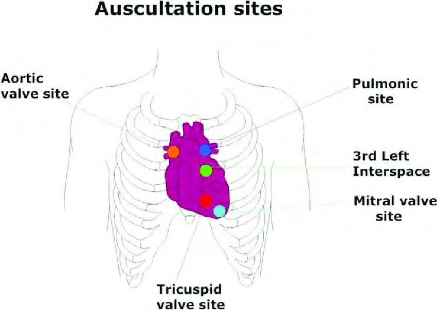 12: Main cardiac auscultation site used for acquiring heart sound, as  indicated by American