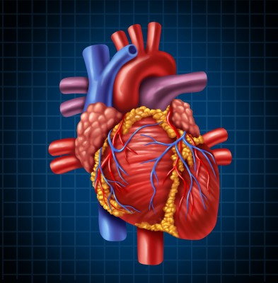 Carditis is a broad term to describe inflammation of the heart or the thin  lining around it. Although the condition can affect a person of any age,