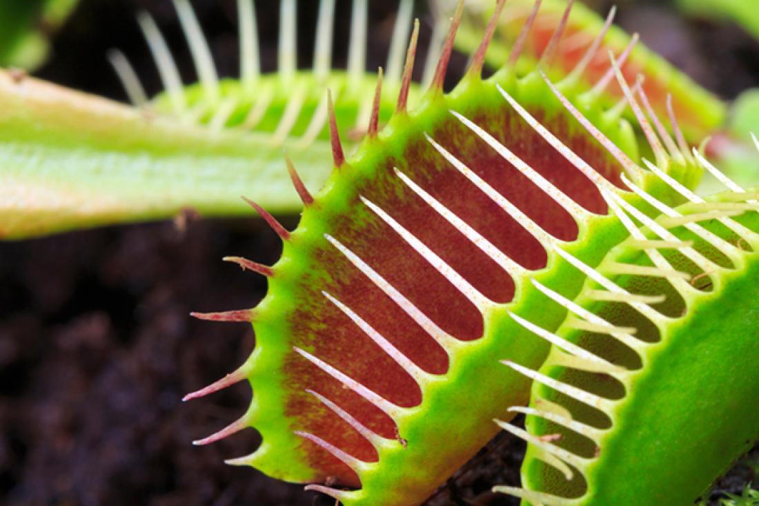 Carnivorous Plant Show