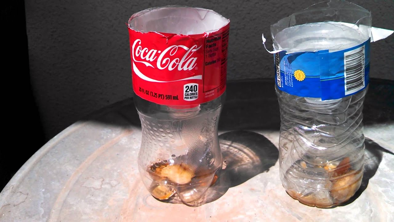 Using a coke bottle to catch flies
