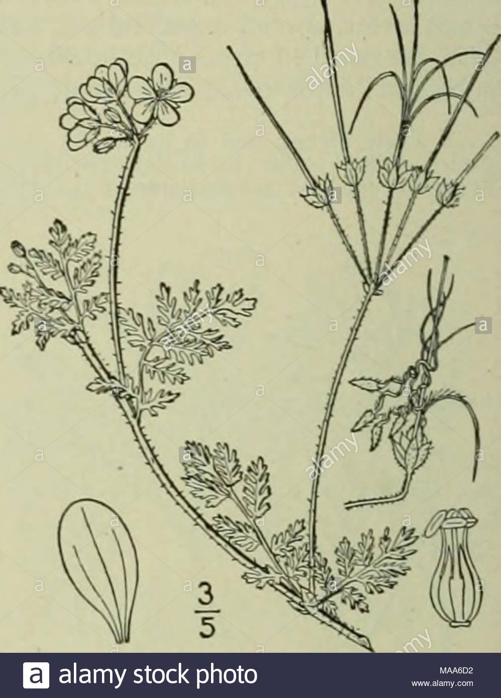 Un ilustrado de la flora del norte de Estados Unidos, Canadá y las  posesiones .
