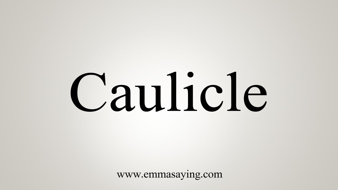 How To Say Caulicle