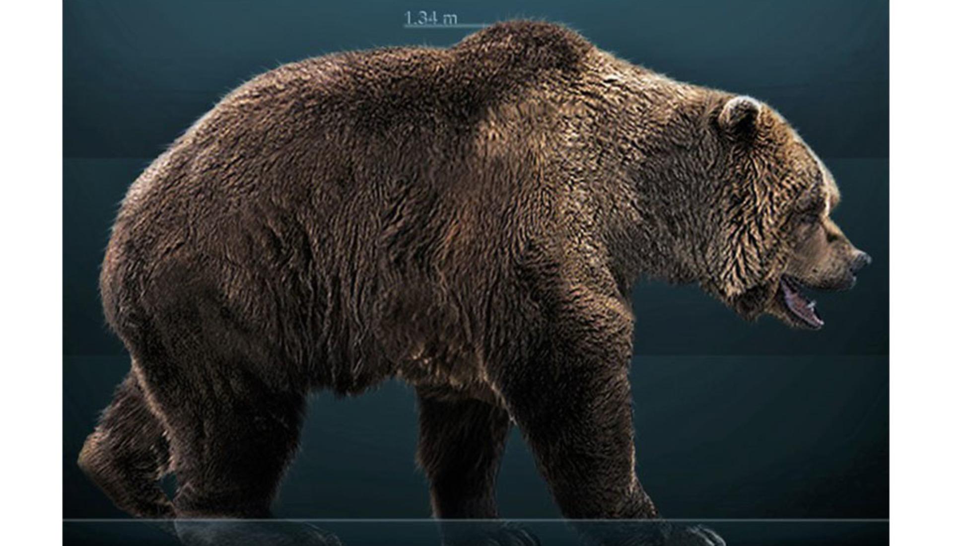 A reconstruction of a European Cave Bear