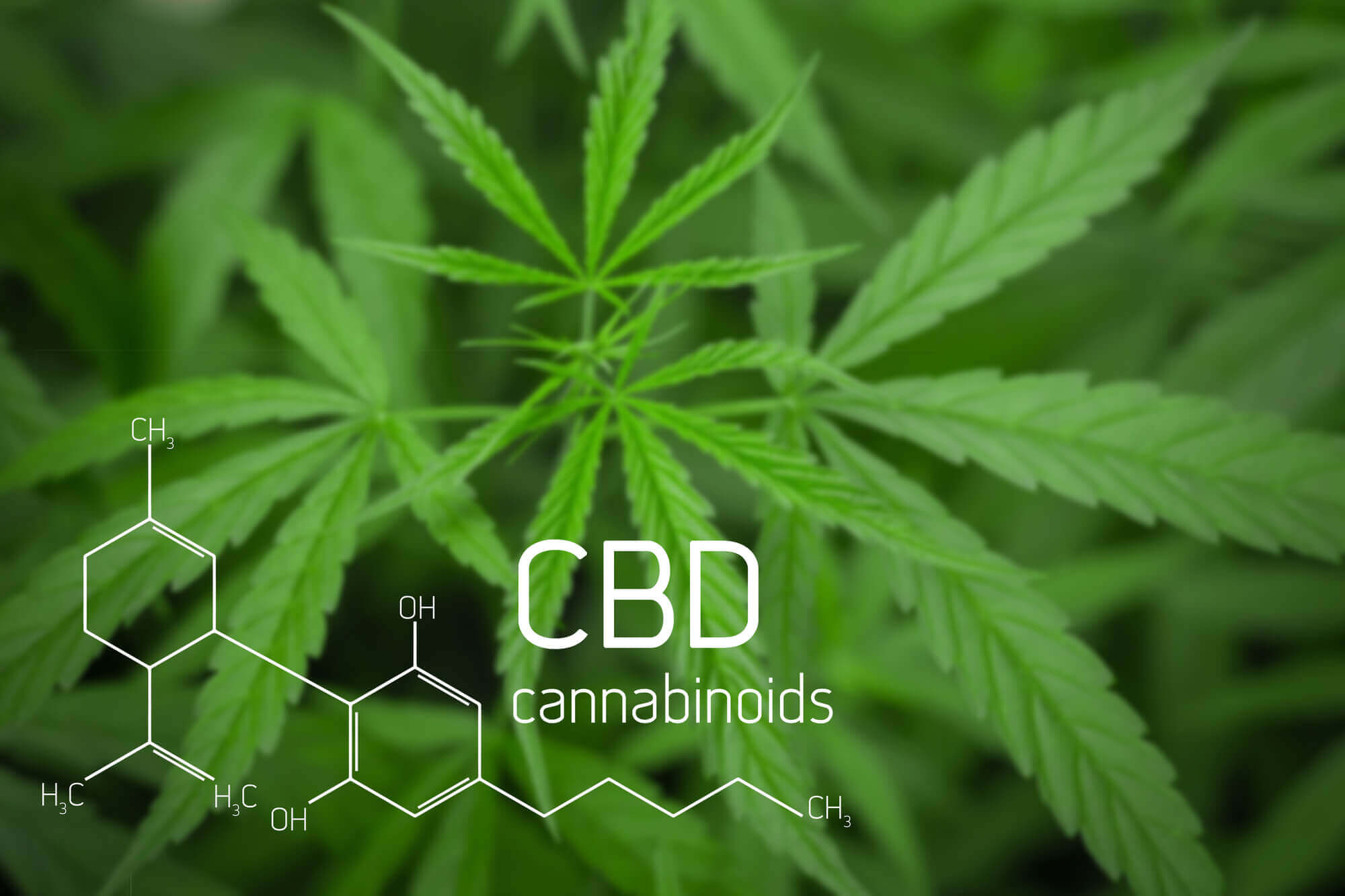 CBD and Diabetes: 5 Ways Cannabidiol May Help in Diabetes Management