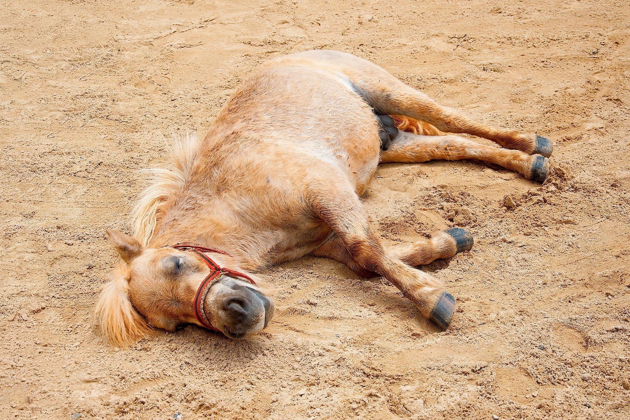 Cecocolostomy in Horses
