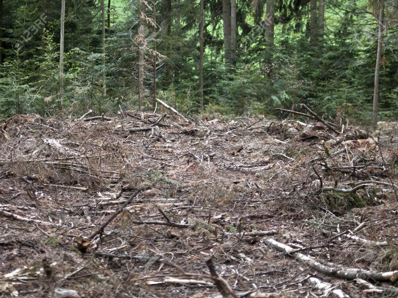 deforest destroyed wood Stock Photo - 39633583