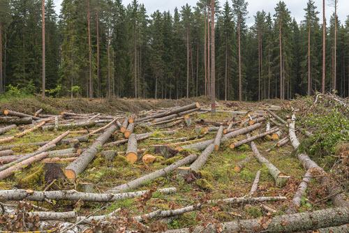 Deforest Action