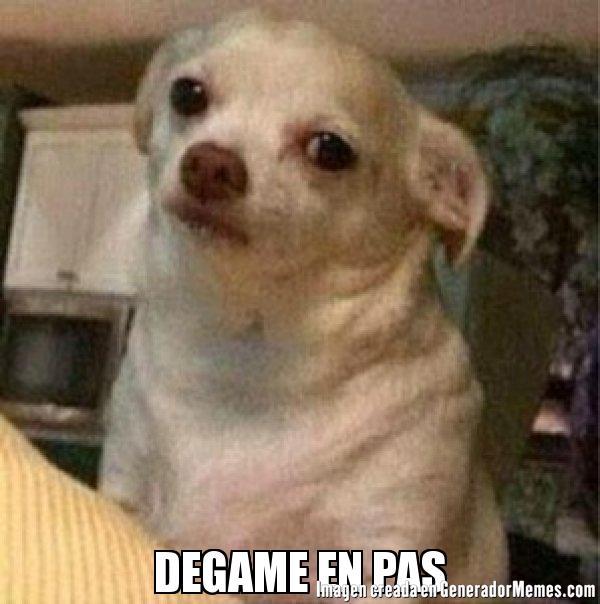 Degame En Pas - Meme De Perro Chihuahua Enojado #imagenes #memes  #generadormemes