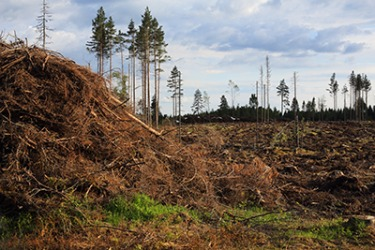 The degradation of the once pristine forest has had a negative impact o the  wildlife in