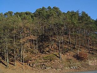 Forest degradation