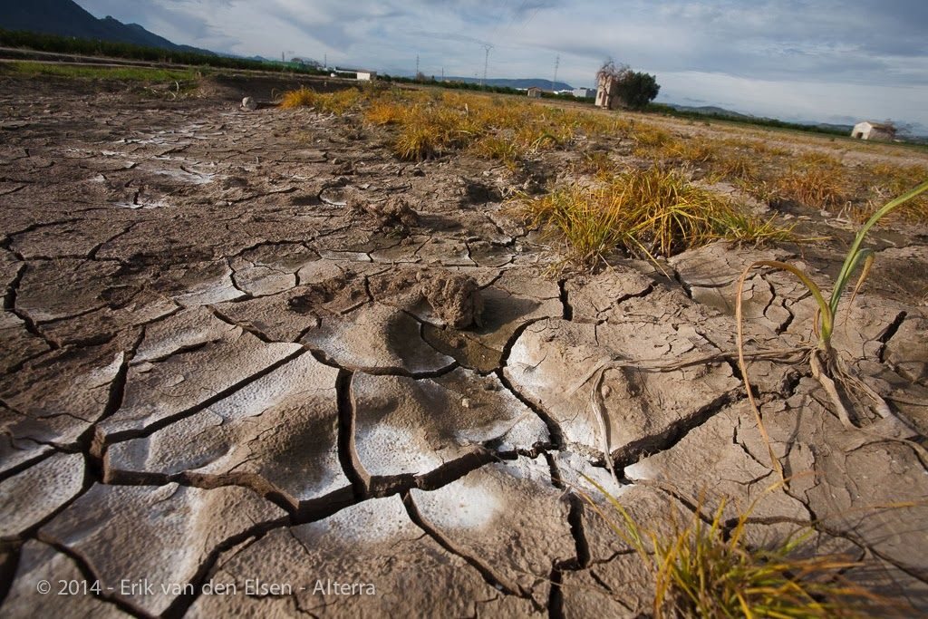 Preventing and Remediating Soil Degradation (RECARE)