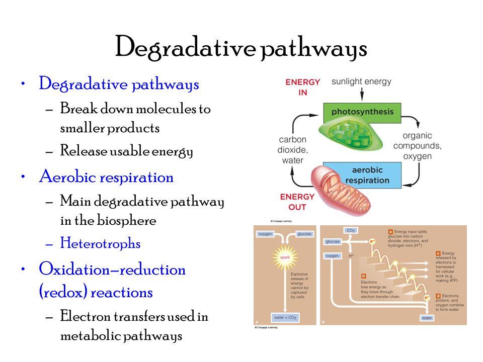 10 Degradative
