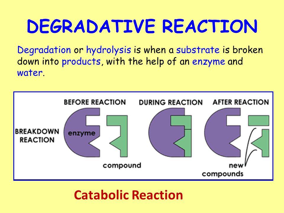 11 DEGRADATIVE REACTION Catabolic Reaction