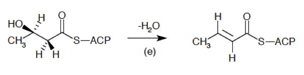 Archivo:3-hydroxyacyl-ACP dehydrase.png