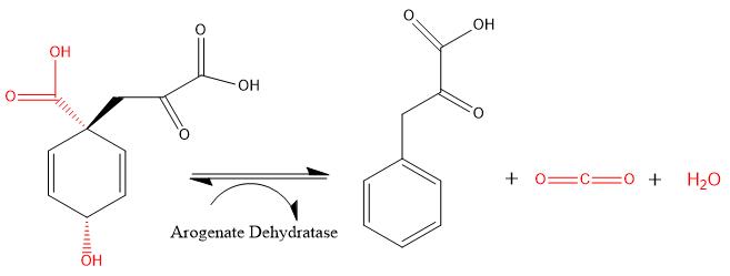 Arogenate dehydratase converting prephenate to phenylpyruvate, carbon  dioxide and water