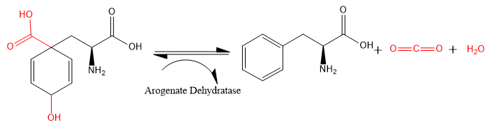 Arogenate dehydratase converting L-arogenate to L-phenylalanine, carbon  dioxide, and water