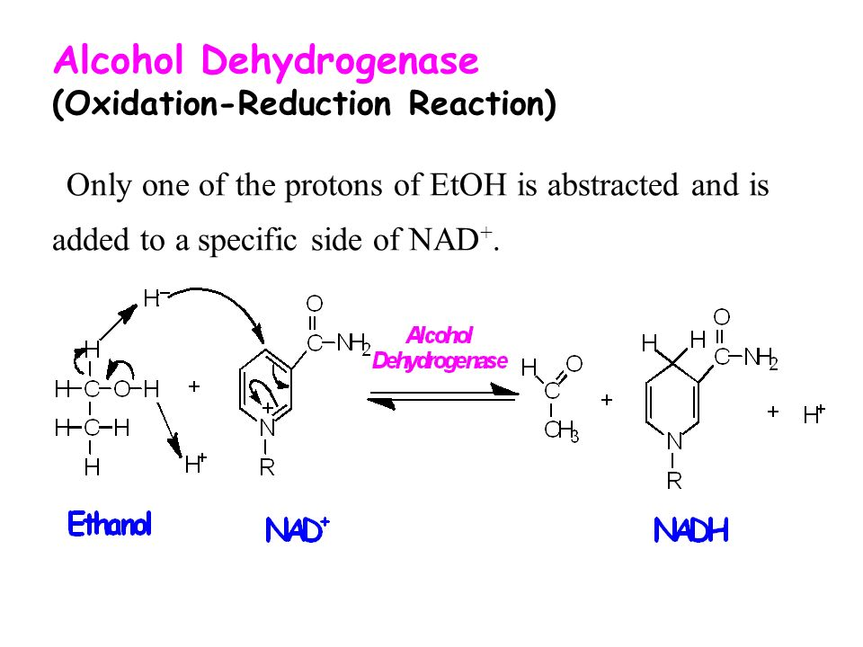 6 Alcohol Dehydrogenase (Oxidation-Reduction Reaction) Only one of the  protons of EtOH is abstracted and is added to a specific side of NAD+.