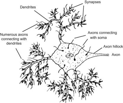 Dendritic Development