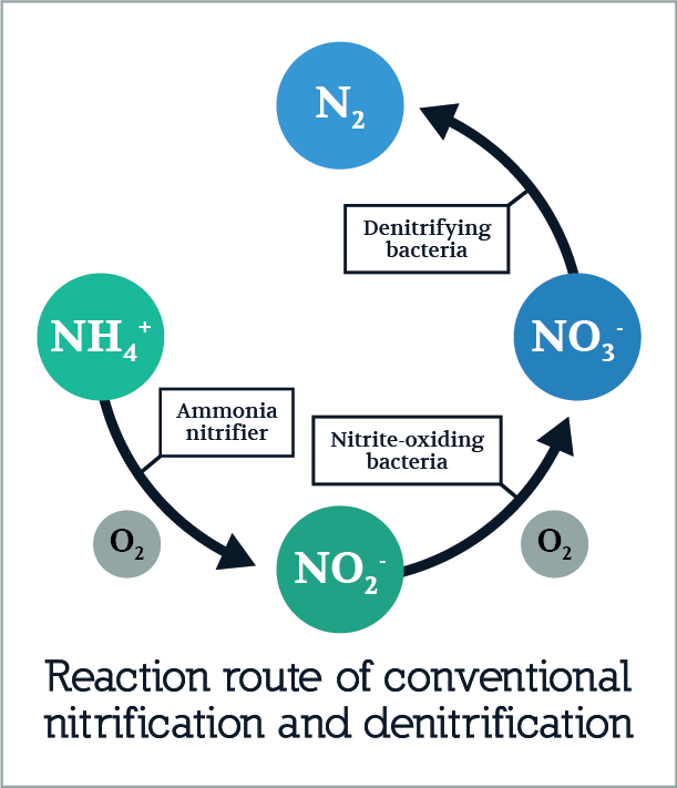 Reaction route of nitrification and denitrification